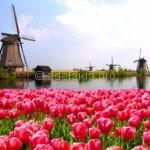 Самые удивительные факты о Нидерландах