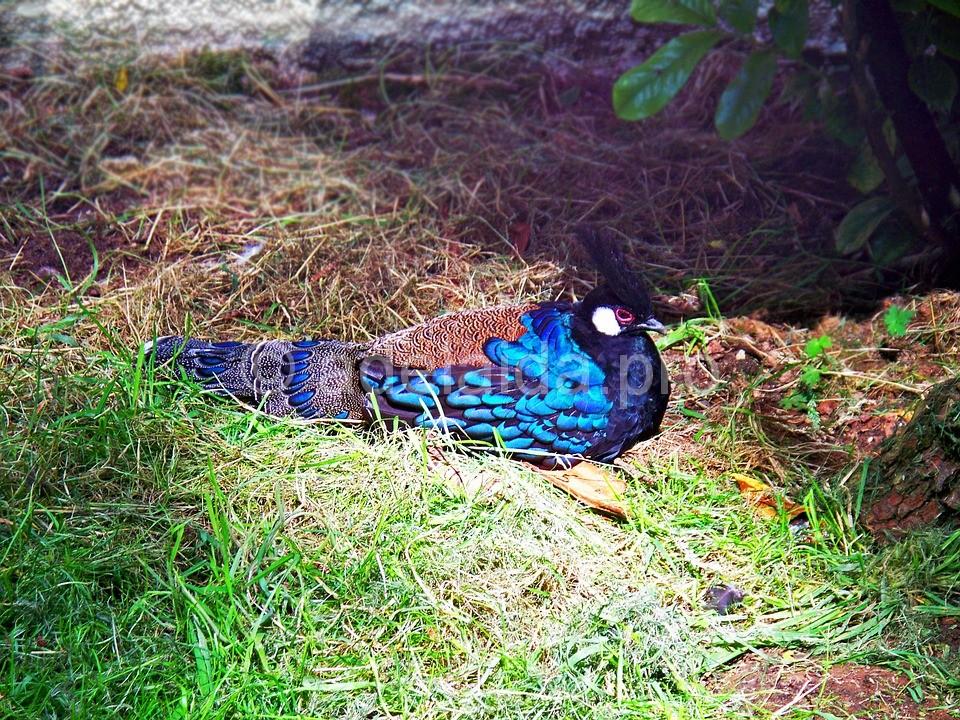 Кроме восхитительной флоры, остров Палаван славится не менее примечательным животным миром