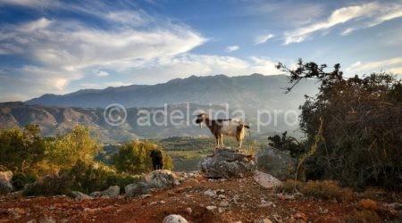 Остров Крит - одно из красивейших мест Греции.