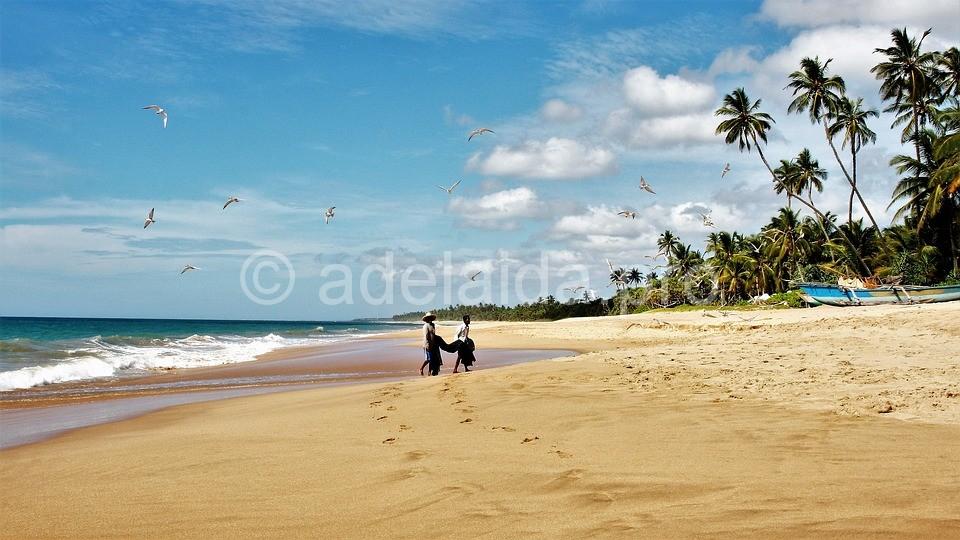 Море положительных впечатлений на острове Цейлон