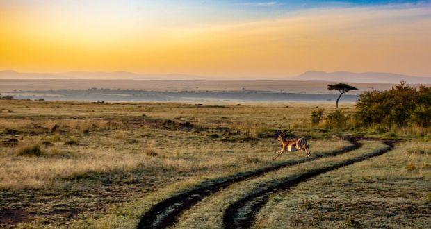 4 мифа о Кении, которые вы можете развеять